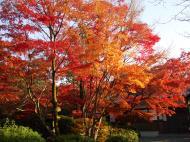 Asisbiz Otowa san Kiyomizu dera temple gardens Kyoto Nov 2009 25