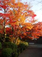Asisbiz Otowa san Kiyomizu dera temple gardens Kyoto Nov 2009 26