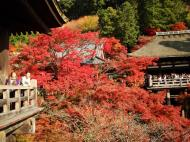 Asisbiz Otowa san Kiyomizu dera wooden terrace Kyoto Nov 2009 06