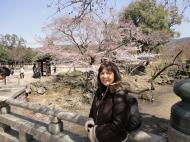 Asisbiz Cherry blossoms along the path heading towards Kasuga Grand Shrine Nara 03
