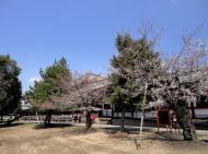 Asisbiz Todai ji architecture outer protective walls sakura season 01