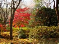 Asisbiz Rokuon ji Temple outdoor zen Gardens Kyoto Japan Nov 2009 05