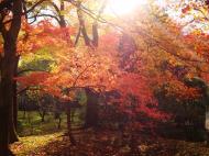 Asisbiz Rokuon ji Temple outdoor zen Gardens Kyoto Japan Nov 2009 06