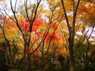 Asisbiz Rokuon ji Temple outdoor zen Gardens Kyoto Japan Nov 2009 08