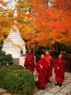Asisbiz Rokuon ji Temple visiting Burmese monks Kyoto Japan Nov 2009 02