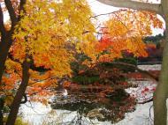 Asisbiz Ryoan ji Kyoyochi Pond Kyoto Japan Nov 2009 12