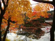 Asisbiz Ryoan ji Kyoyochi Pond Kyoto Japan Nov 2009 13