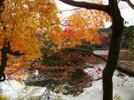 Asisbiz Ryoan ji Kyoyochi Pond Kyoto Japan Nov 2009 14