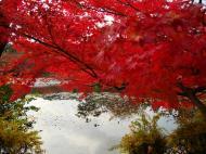Asisbiz Ryoan ji Kyoyochi Pond Kyoto Japan Nov 2009 15