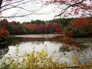 Asisbiz Ryoan ji Kyoyochi Pond Kyoto Japan Nov 2009 16
