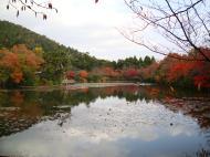 Asisbiz Ryoan ji Kyoyochi Pond Kyoto Japan Nov 2009 19