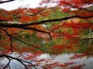 Asisbiz Ryoan ji Kyoyochi Pond Kyoto Japan Nov 2009 22