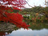Asisbiz Ryoan ji Kyoyochi Pond Kyoto Japan Nov 2009 23