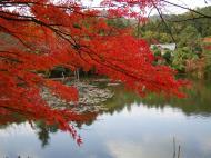 Asisbiz Ryoan ji Kyoyochi Pond Kyoto Japan Nov 2009 24