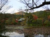 Asisbiz Ryoan ji Kyoyochi Pond Kyoto Japan Nov 2009 26