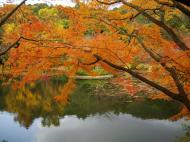 Asisbiz Ryoan ji Kyoyochi Pond Kyoto Japan Nov 2009 28