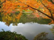 Asisbiz Ryoan ji Kyoyochi Pond Kyoto Japan Nov 2009 29