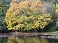 Asisbiz Ryoan ji Kyoyochi Pond Kyoto Japan Nov 2009 37