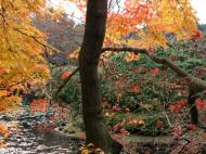 Asisbiz Ryoan ji Kyoyochi Pond Kyoto Japan Nov 2009 38
