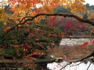 Asisbiz Ryoan ji Kyoyochi Pond Kyoto Japan Nov 2009 39