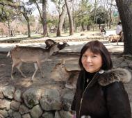 Asisbiz Sika deer are very customed to tourists Nara Japan 01