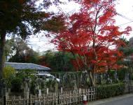 Asisbiz May Peace Prevail on Earth Garden Kyoto Japan Nov 2009 11