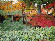 Asisbiz Tenryu ji Sogenchi Rinzai Zen garden Kyoto 2009 08