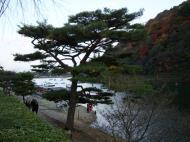 Asisbiz Tenryu ji Sogenchi area guest house Kyoto 2009 17