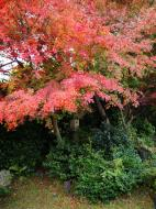 Asisbiz Tenryu ji Sogenchi area guest house Kyoto 2009 20