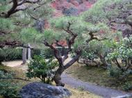 Asisbiz Tenryu ji Sogenchi area guest house Kyoto 2009 24
