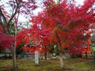 Asisbiz Tenryu ji Sogenchi garden area Kyoto 2009 05