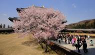 Asisbiz 1 Todaiji Daibutsuden cherry trees Japan 03