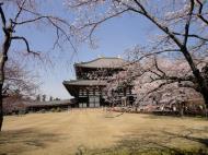 Asisbiz 1 Todaiji Daibutsuden cherry trees Japan 04