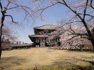 Asisbiz 1 Todaiji Daibutsuden cherry trees Japan 05