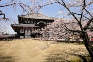 Asisbiz 1 Todaiji Daibutsuden cherry trees Japan 06