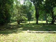 Asisbiz Penang Botanical Gardens Mar 2001 01