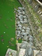 Asisbiz Ipoh Sam Poh Tong Monastery Temple Turtles Jul 2000 01