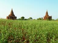 Asisbiz Panoramic views Bagan Myanmar Dec 2000 118