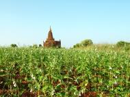Asisbiz Panoramic views Bagan Myanmar Dec 2000 119