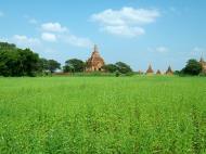 Asisbiz Panoramic views Bagan Myanmar Dec 2000 73