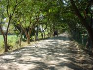 Asisbiz Bagaya Kyaung Monastery road to Mandalay Jan 2001 01