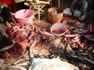 Asisbiz Local cottage industry farming dried catfish production Butchery 04