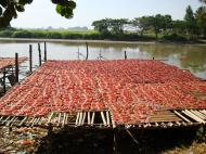 Asisbiz Local cottage industry farming dried catfish production drying racks 01