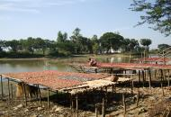 Asisbiz Local cottage industry farming dried catfish production drying racks 02