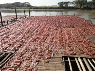Asisbiz Local cottage industry farming dried catfish production drying racks 03