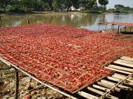 Asisbiz Local cottage industry farming dried catfish production drying racks 04
