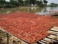 Asisbiz Local cottage industry farming dried catfish production drying racks 05