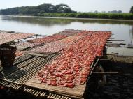 Asisbiz Local cottage industry farming dried catfish production drying racks 06
