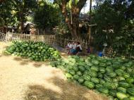 Asisbiz Local cottage industry farming watermellon production village distribution centers 03