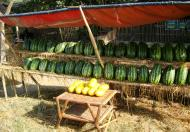 Asisbiz Local cottage industry farming watermellon production village distribution centers 04
